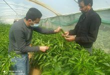 Photo of زراعة الوسطى تنفذ جولة إرشادية على مزارعي الخضار في قرية وادي السلقا