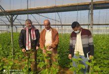 """Photo of بالصور..مهندسو الوسطى يتفقدون مزارعي الخضار في """"دير البلح"""""""