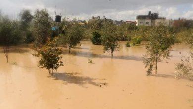 Photo of من جديد الاحتلال يفتح عبارات المياه شرق بيت حانون ويغرق أكثر من (100) دونم