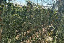 Photo of بالصور..زراعة الشمال تستجيب لنداءات المزارعين المتضررين من المنخفض الجوي                 غزة /إعلام الزراعة