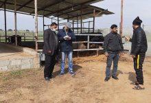 Photo of زراعة خانيونس تنظم زيارات ميدانية على مربي أبقار الحليب