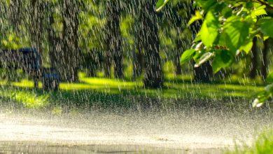 Photo of الزراعة: ارتفاع متوسط إجمالي هطول الامطار الى 313.7 ملم ومعدل 83%