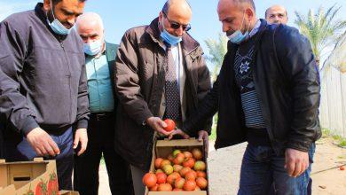 Photo of الزراعة تتفقد قطاع الانتاج النباتي والحيواني في مواصي خان يونس