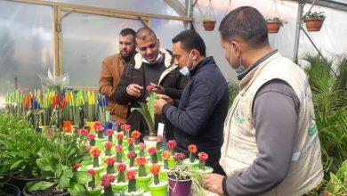 Photo of بالصور..الزراعة تنفذ جولات ميدانية علي أصحاب المشاتل