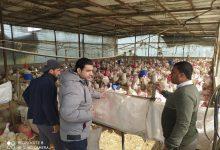 Photo of بالصور..زراعة خانيونس تنظم جولة ارشادية على مربي الدواجن اللاحم وموردي الاعلاف