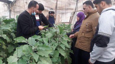 Photo of الزراعة تحث المزارعين على الالتزام بخطة تحديد المساحات الزراعية فى العروة الربيعية