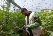 Photo of مديرية زراعة غزة تكثف من جولاتها الارشادية على مزارعي الخضار ومربي الدواجن