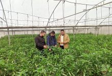 Photo of زراعة رفح تواصل جولاتها الميدانية على مزارعي الخضار