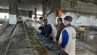 Photo of بالصور: جولات تفقديةو إرشادية على مربي الأرانب في غزة والوسطى