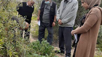 Photo of زراعة الشمال تتفقد مزارعي البستنة الشجرية