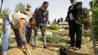Photo of زراعة خانيونس و بلدية عبسان الكبيرة تشرعان بزراعة اشتال الزينة في المرافق العام