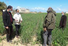 Photo of بالصور..زراعة خانيونس تتابع مزارعي الخضار بالمحافظه