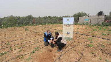 Photo of بالتعاون مع مؤسسة غازي ديستك ..الزراعة:تسليم اشتال زيتون وشبكات ري لعدداً من مزارعي غزة