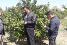 Photo of زراعة الشمال تنفذ جولة ميدانية على مزارعي الزيتون والحمضيات