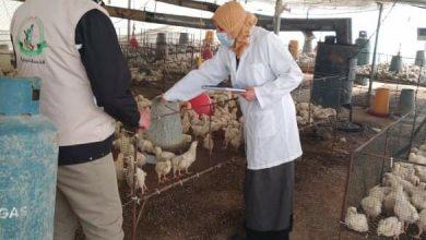 Photo of صور..بيطرة خانيونس تتفقد مزارع الدجاج اللاحم وتقدم الرعاية اللازمة