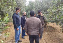 Photo of الزراعة تتفقد مزارعي الزيتون في منطقة شرق غزة