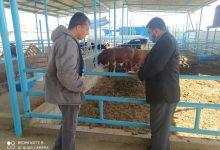 Photo of بالصور..زراعة خانيونس تتابع مزارع تسمين المواشي