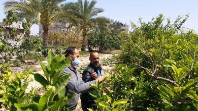 Photo of زراعة خانيونس تنفذ جولة ميدانية على مزارعي الحمضيات و اللوزيات