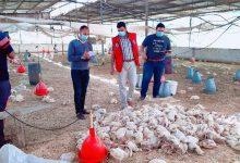 Photo of زراعة خان يونس تتابع الآثار السلبية لموجة الحر الأخيرةعلى مزارع الدجاج
