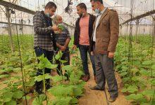 Photo of زراعة رفح تنفذ زيارات تفقدية لمزارعي الخضار