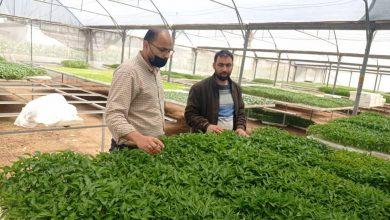 Photo of بالصور.. مديرية زراعة غزة تنظم جولة تفقدية على مشاتل الخضار