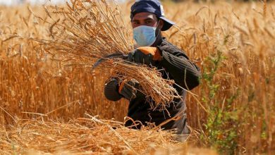 Photo of دعوة عامة .. (موسم حصاد القمح ٢٠٢١)