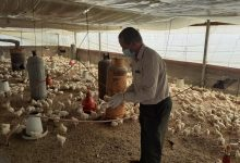 Photo of الخدمات البيطرية برفح تتابع مزارعي الدواجن