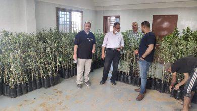 Photo of زراعة رفح تتابع توزيع الأشتال الخاصة بمشروع تخضير فلسطين