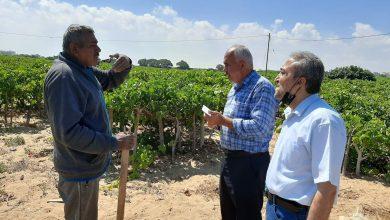 Photo of الزراعة تتفقد مزارع العنب فى منطقة الشيخ عجلين