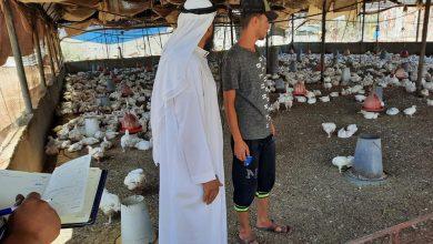 Photo of زراعة رفح تنفذ جولة إرشادية لمزارع الدجاج اللاحم في المحافظة