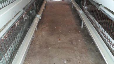 Photo of زراعة غزة تتابع ضمان توفير الدجاج اللاحم للمواطنين