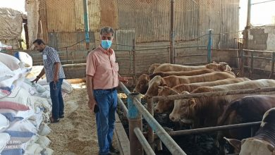 Photo of مع اقتراب موسم الأضاحي ..الزراعة تؤكد على اتباع الشروط الفنية الخاصة بالمزارع والمسالخ