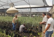 Photo of الزراعة تتفقد المشاتل الزراعية وتقدم الإرشادات الفنية اللازمة لتراخيصها
