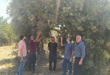 "Photo of الزراعة تتفقد مزارعي البستنة الشجرية في منطقة ""المصدر"""