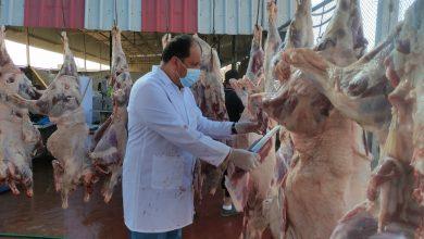 Photo of الزراعة : غزة تضحي ( ٥٠ ألف) رأس من العجول والأغنام