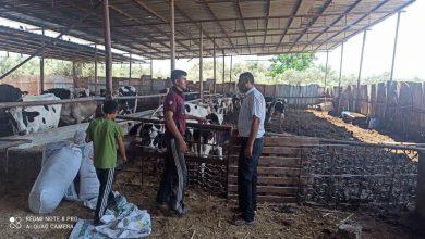 Photo of الخدمات البيطرية بشمال غزة تتفقد مزارع الابقار