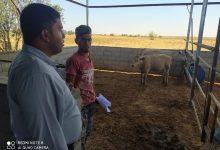 Photo of زراعة خانيونس ترشد المزارعين والمربين في المحافظة