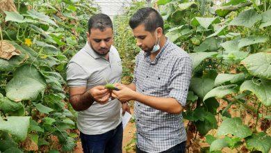 Photo of زراعة رفح تنفذ عدة جولات ميدانية لمتابعة المزارعين في المحافظة