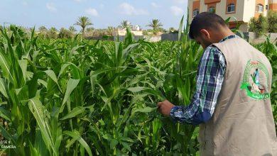 Photo of زراعة الوسطى تنفذ جولة إرشادية على مزارعي الخضار المكشوفة