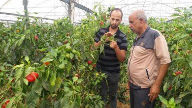 Photo of زراعة خان يونس ترشد مزارعي الدفيئات الزراعي بالمحافظة