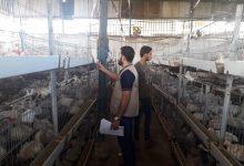 Photo of الزراعة تتابع ملف ترخيص مزارع الدواجن