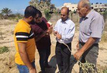 Photo of زراعة رفح تنفذ سلسلة جولات ارشادية لمزارعي الزيتون