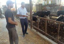 Photo of الخدمات البيطرية في الشمال  تتفقد مزارع الأبقار