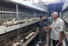 Photo of الزراعة تنفذ جولة إرشاديةعلى مزارع الدجاج اللاحم