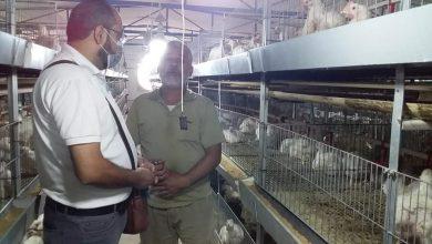 Photo of زراعة غزة تنظم جولة تفقدية على مربي الدجاج اللاحم