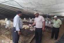 Photo of زراعة خانيونس ترشد مربي الدجاج اللاحم في حي المنارة