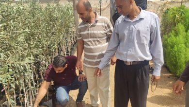 Photo of زراعة رفح تنظم جولات ميدانية على مشاتل البستنة والزينة