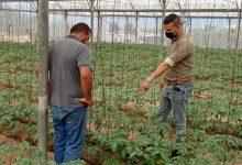 Photo of زراعة غزة تنفذ سلسلة جولات ميدانية على مزارعي الخضار ومربي المواشي