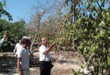 Photo of زراعة رفح تنفذ جولة إرشادية على مزارعي الجوافة