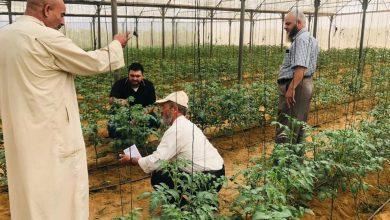 Photo of زراعة خانيونس تتفقد مزارعي الخضار استعداًداً للموسم الجديد